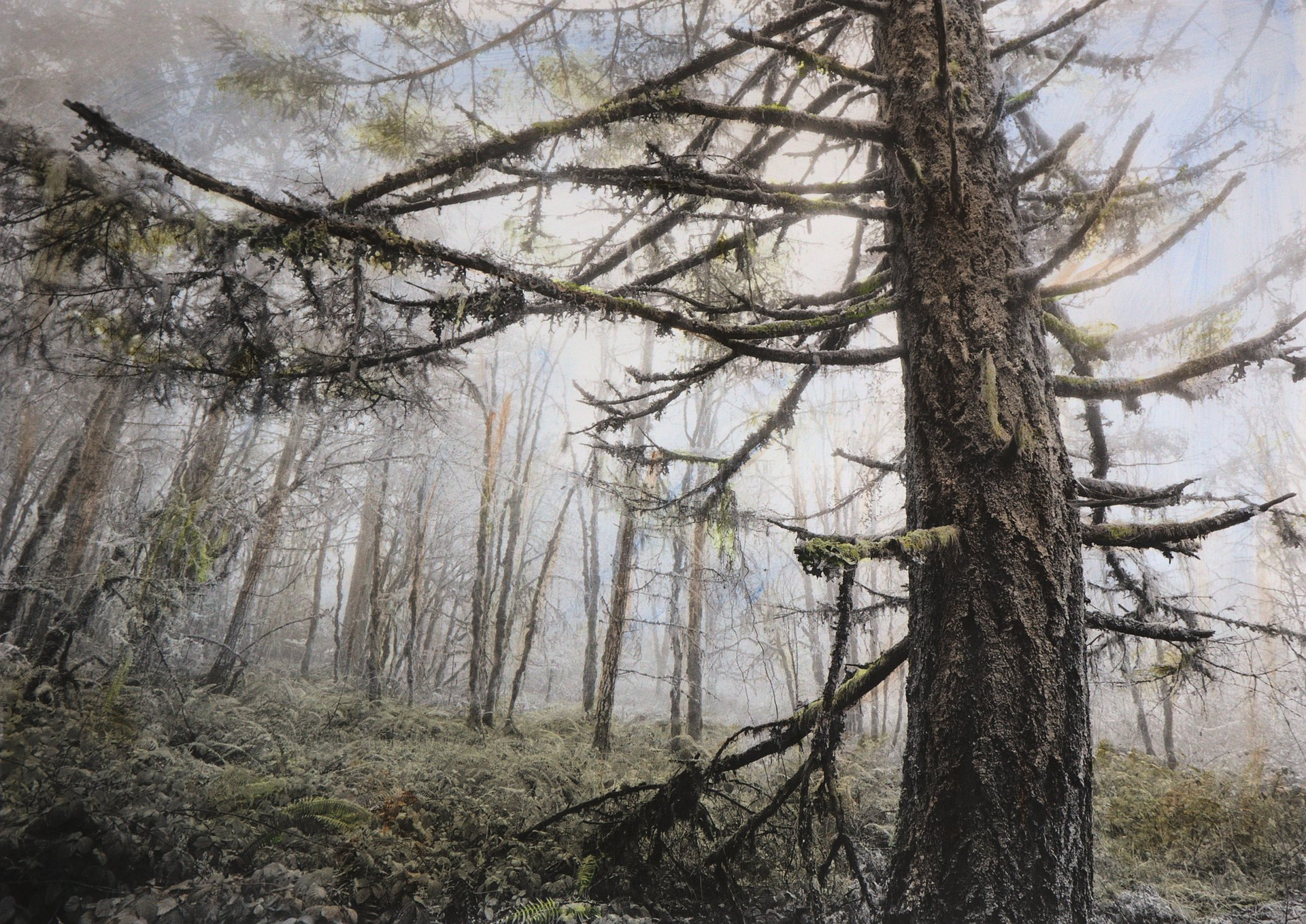 Fir Forest 2016.2: 22x30 inch hand-colored photo