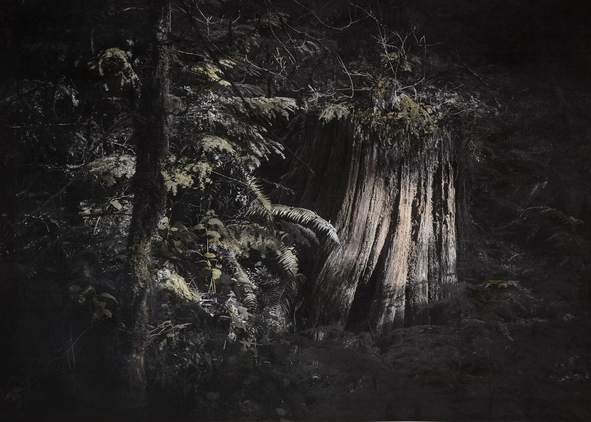 Stump 2015.23 -- 22x30 inch hand-colored photo
